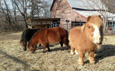 Horse Rescue Saratoga NY | Horse Sanctuary Pattersonville NY